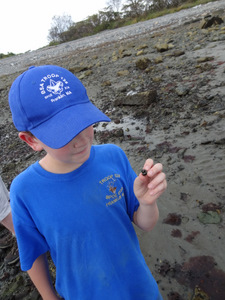 Exploring the Rocky Intertidal Zone